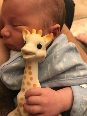 Giraffe at 5 days